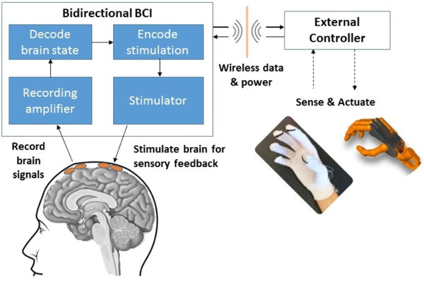 A bidirectional brain-computer interface (BBCI) can both record signals from the brain and send information back to the brain through stimulation. CSNE